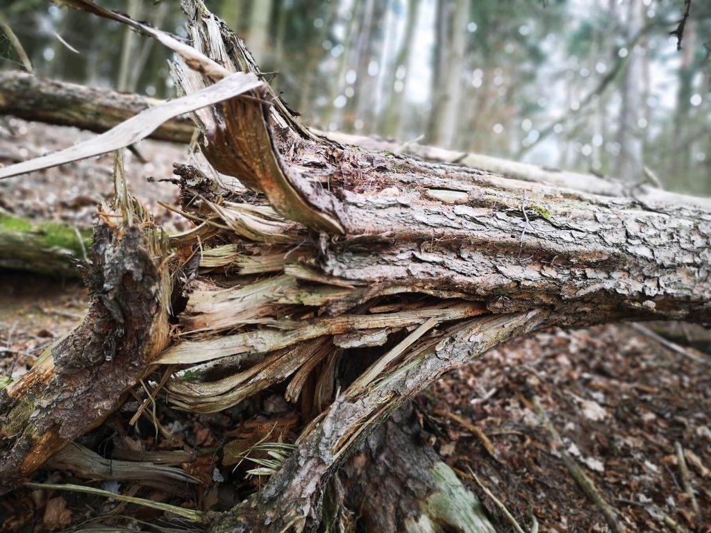 Gebrochener Baum als Symbolbild für Konflikte